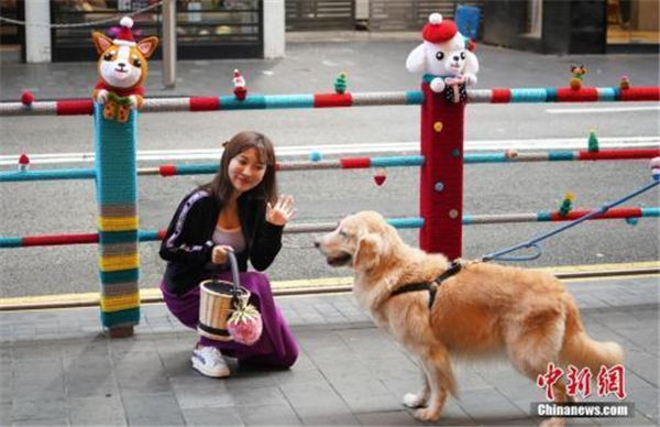 多城出台养犬新政 纵犬、虐犬都将面临重罚!
