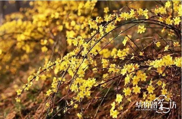 """【约""""绘""""春天】4月14日,复地宴南都举办长卷手绘亲子DIY活动啦,一起用画笔记录美丽的春天吧!"""