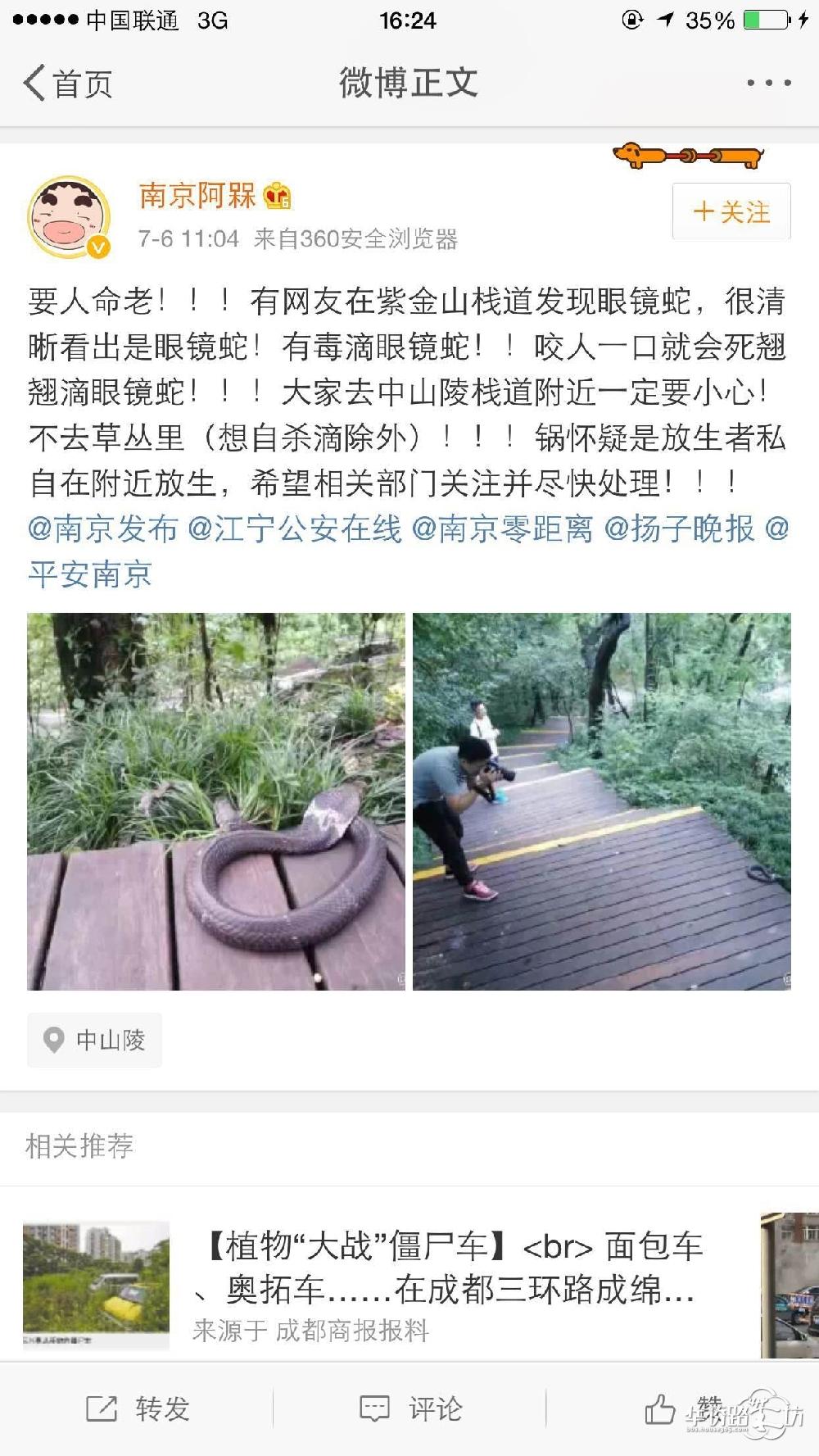 南京紫金山栈道发现眼镜蛇?真的假的,好吓人!这样放生真的是害人好吗!